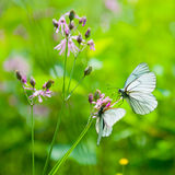 Butterflies on the flower Royalty Free Stock Photo