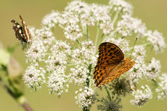 Butterflies on flower Stock Photos