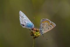 Butterflies on flower Stock Photo