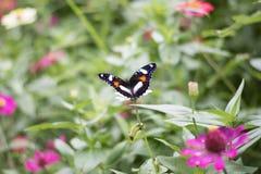 Butterflies in the flower garden stock image