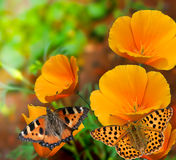 Butterflies on flowers Stock Images
