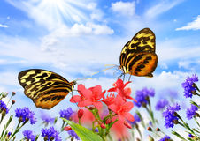 Butterflies with flowers stock images