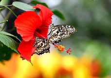 Butterflies and flowers Stock Images