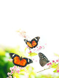 Butterflies on flowers. Flora and fauna, with blank copy space on top Royalty Free Stock Photography