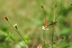 butterflies and flowers Royalty Free Stock Images
