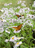 Butterflies in the flowers Stock Photos