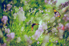 Butterflies in flowers Royalty Free Stock Image