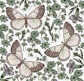Butterflies. Flowers. Beautiful background. Stock Images