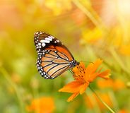 Butterflies and Flowers. The Butterflies and Flowers on backgrund Stock Photo