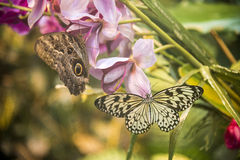 Butterflies on flowers Stock Photography
