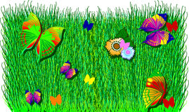 Butterflies, Flowers and Grass Stock Image
