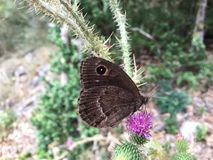 Butterflies. Flowers, insect, animal, nature Royalty Free Stock Photos