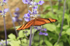 Butterflies, flowers and plants Royalty Free Stock Image
