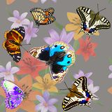 Butterflies on flowers on a seamless pattern. royalty free illustration