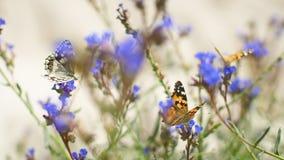 Butterflies flutter over blue flowers