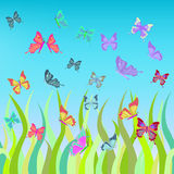 Butterflies fly over the grass. vector illustration Stock Photography
