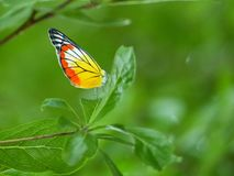 Butterflies fly on top of the tree. Royalty Free Stock Image