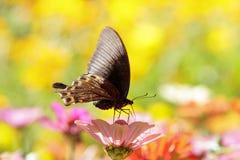 Butterflies flying Stock Photo