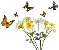 Butterflies Flying over Daisies Stock Photo