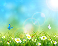 Butterflies flying over flowers Royalty Free Stock Photos
