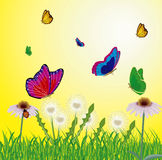 Butterflies flying on year meadow Stock Photo