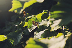 Butterflies In Forest. Beautiful butterfly stay on a green leaf Stock Photo