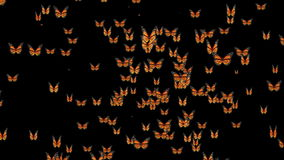 Butterflies Forming Earth Map stock video
