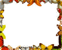 Butterflies frame Stock Photo