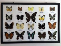 Butterflies framed, collection Stock Images