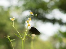 Butterflies in fresh green grass fields. Butterflies fresh green grass fields summer nature flower spring meadows season garden background beauty environment royalty free stock photography