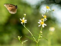 Butterflies in fresh green grass fields. Butterflies fresh green grass fields summer nature flower spring meadows season garden background beauty environment stock photography