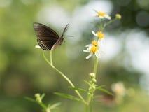 Butterflies in fresh green grass fields. Butterflies fresh green grass fields summer nature flower spring meadows season garden background beauty environment stock photos