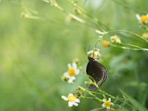 Butterflies in fresh green grass fields. Butterflies fresh green grass fields summer nature flower spring meadows season garden background beauty environment stock images