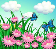 Butterflies at the garden with pink flowers Stock Images