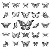 Butterflies graphic illustration Stock Photography