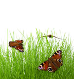 Butterflies on the grass Royalty Free Stock Images