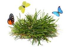Butterflies and grass Stock Photography