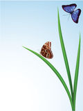 Butterflies in the grass Stock Photography