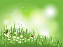 Butterflies in grass with daisies Stock Image