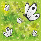 Butterflies on green background. Stock Image