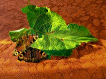 Butterflies on a green leaf stock images