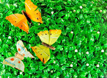Butterflies on green  leaves Stock Photos