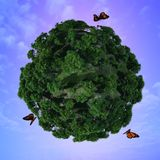 Butterflies and green planet. Stock Images