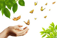 Butterflies in green Royalty Free Stock Photography