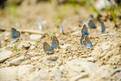 Butterflies on the ground Royalty Free Stock Photo