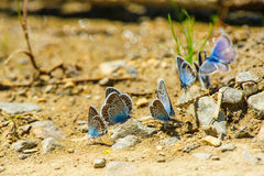 Butterflies on the ground Royalty Free Stock Photos