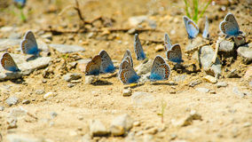 Butterflies on the ground Royalty Free Stock Photography