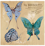 Butterflies - An hand painted vector, converted. BUTTERFLIES pack - An hand painted illustrations converted into vector.  Technique: Acrylic paint Royalty Free Stock Photo