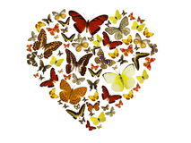 Butterflies heart background Royalty Free Stock Image