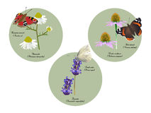 Butterflies and herbs Stock Photos